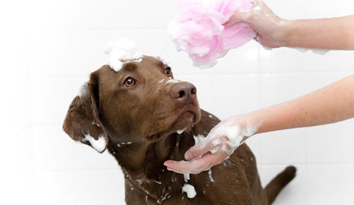 Igiene e bellezza del cane