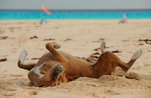 Risultati immagini per cane mare