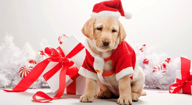 Foto Di Natale Con Cani.Toelettatura Pelo Pelo