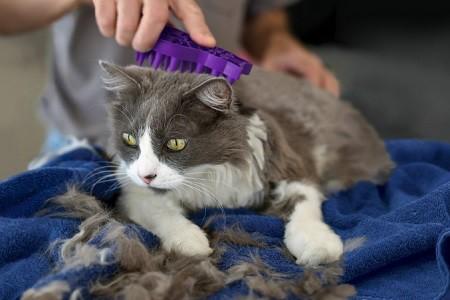 perdita del pelo del gatto